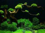 Bonsai podwodne