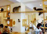 Kawiarnia dla kotów i ich właścicieli - modne miejsca Montreal, zdjęcie 1
