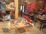 Kawiarnia dla kotów i ich właścicieli - modne miejsca Montreal, zdjęcie 2