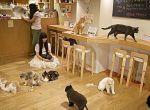 Kawiarnia dla kotów i ich właścicieli - modne miejsca Montreal, zdjęcie 3
