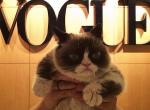 Grumpy Cat w Vogue, zdjęcie 5