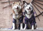 Moochi & Skye