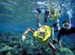 Piękno podwodnego świata