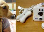 Psiak i jego gadżet-kamera