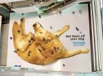 Błyskotliwe reklamy