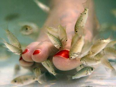 Doctor Fish pomoże twoim stopom!