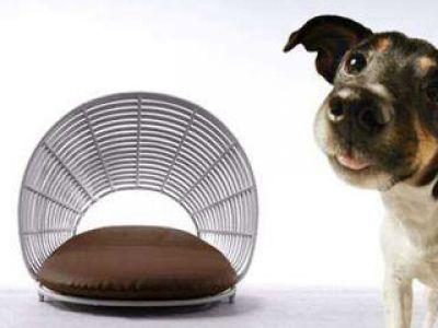 Dizajnerskie meble dla psów