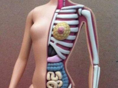 Anatomiczna Barbie