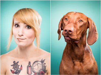 Psy trendy: Podobieństwa