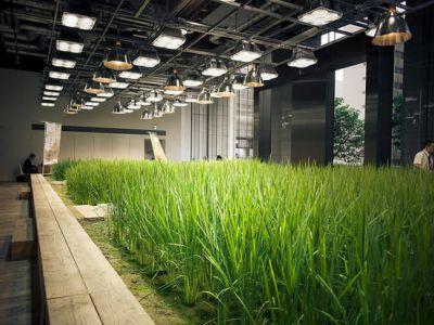 Trend na ekologię w architekturze
