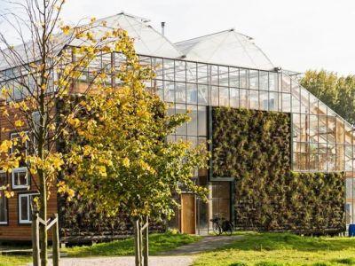 Trendy architektura: dom-szklarnia