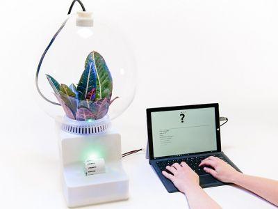 Innowacyjna technologia: Interaktywna Roślina