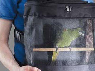 Kanarki na Kanary – klatka dla ptaków-podróżników.