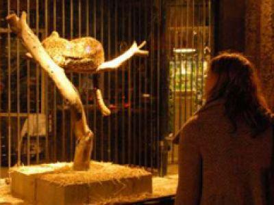 Banksy otwiera sklep zoologiczny - (VIDEO)