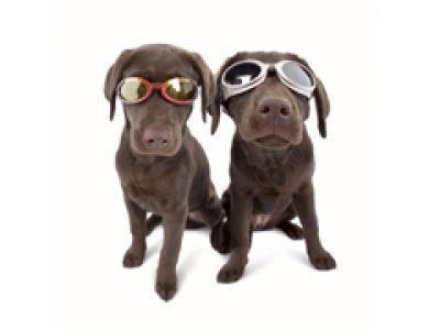 Doggles - twój pies jako fashion victim.