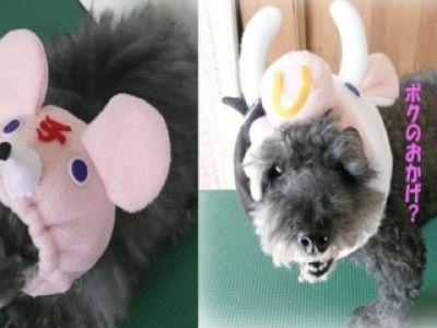 Japończycy też kochają psy!
