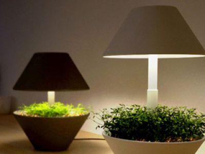Lampka ogródek