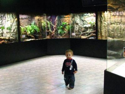 Aquarium i Muzeum przyrodnicze w Krakowie