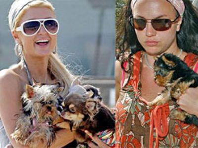 Gwiazdy i celebrities- styl życia. 2007 - rok psów.