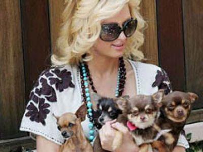 Paris Hilton przedstawicielką więziennej śmietanki towarzyskiej