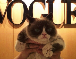 Grumpy Cat w Vogue