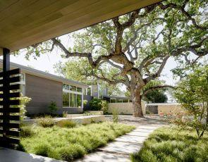Trendy architektura: dom z drzewem