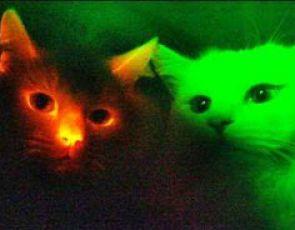 Szokujące. Świecące koty