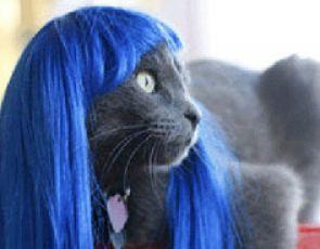 Moda dla zwięrząt - Peruki dla kotów