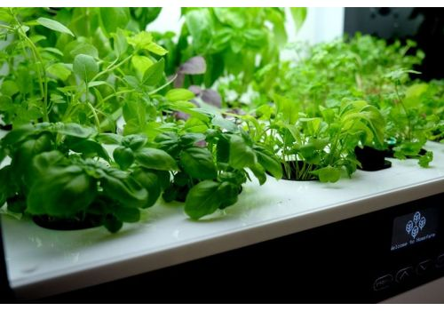 Eco design: uprawa w kuchni